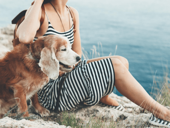 Help your dog enjoy his golden years with these expert tips.
