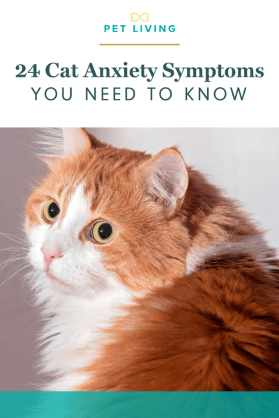 Cat anxiety symptoms aren't always obvious.
