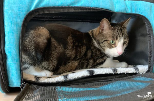 Lil Paws Pet Carrier is great for cats with anxiety.