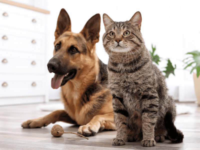 Here are the best vacuums for dog and cat hair.