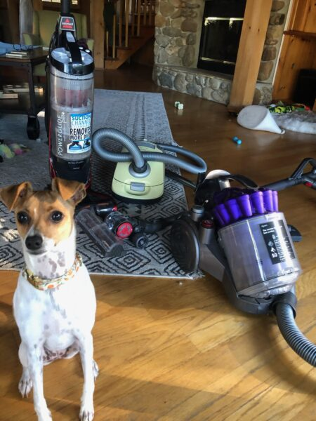 Tulip with my favorite vacuums for pet hair.