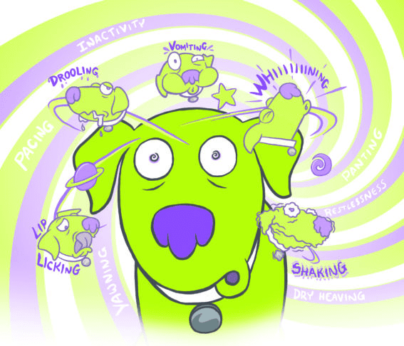 Here are some signs of motions sickness in dogs