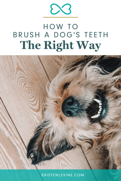 Learn how to brush your dog's teeth the right way for better health. Plus, alternative ways to maintain dental health in picky dogs.