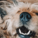 Learn how to brush a dog's teeth the right way for better health!