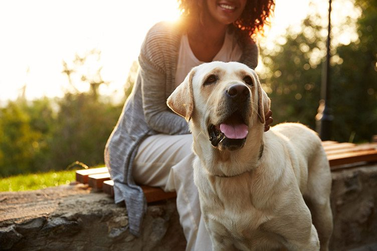 sitting with dog pet advice