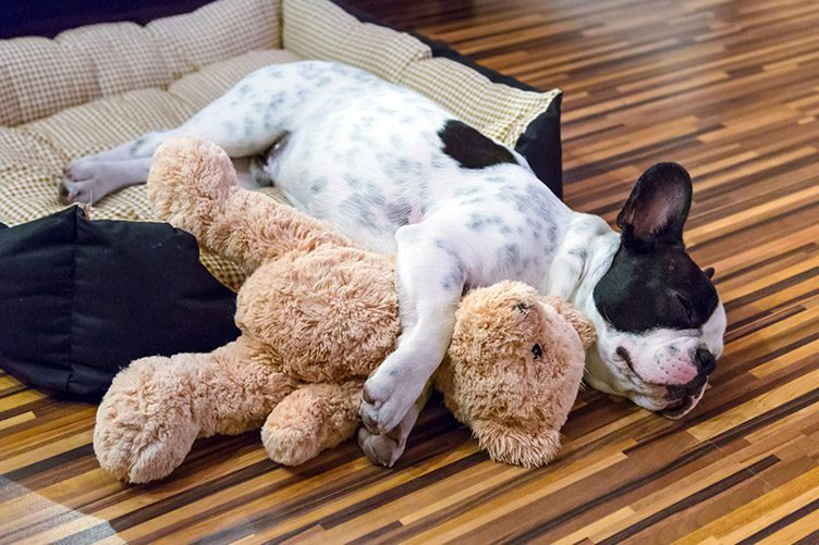 puppy sleeps with toy pet advice