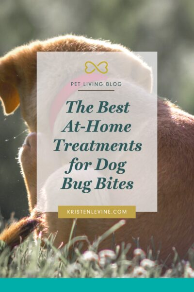 Easy ways to treat your dog's bug bites at home.