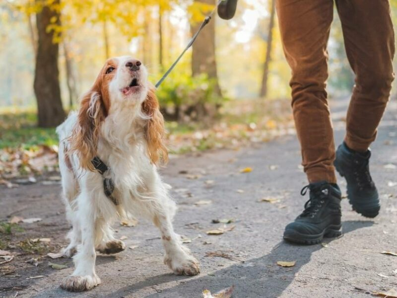You can help your dog with social anxiety and fear of strangers.