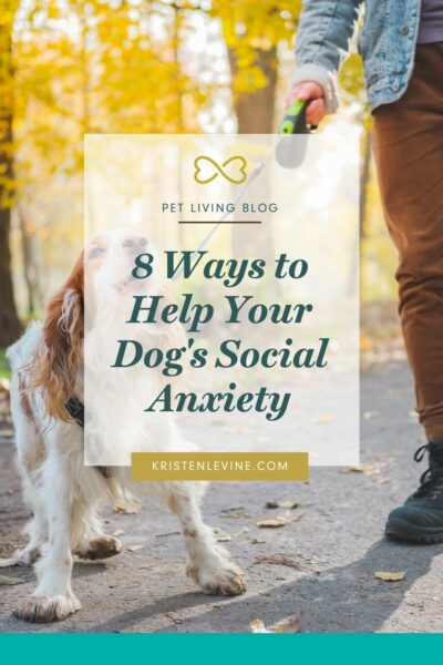 You can help your dog's social anxiety and fear of strangers.