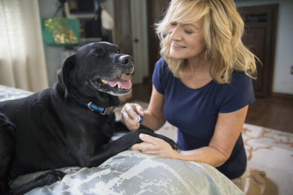 Vetericyn wound care helps soothe and treat dog bug bites.