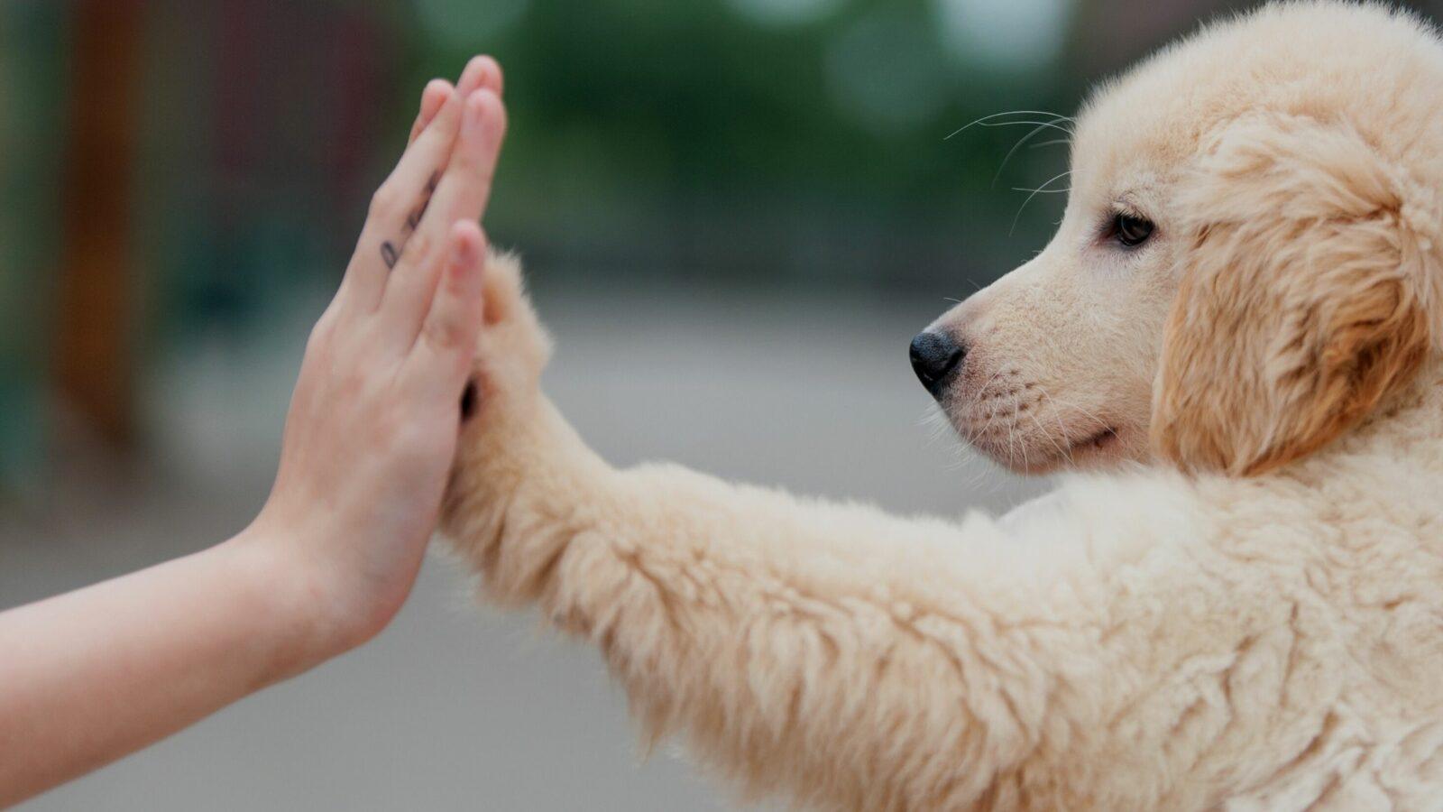 Pet Anxiety Awareness Event Sponsors