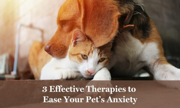 Effective anxiety therapies for pets