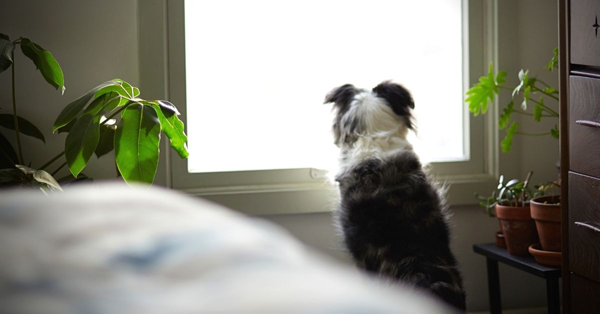 Dog Separation Anxiety: What to Do When Your Dog Can't Live Without You
