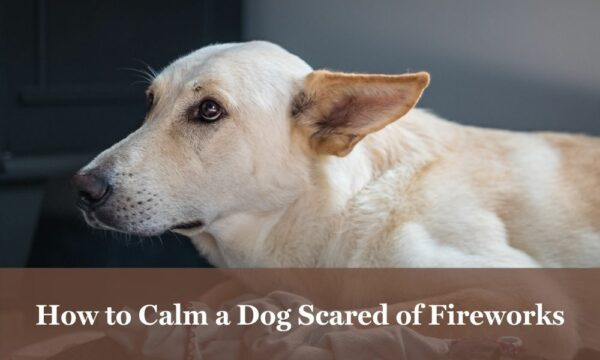 Help for dogs afraid of fireworks