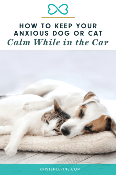 A peaceful dog and cat are resting on a pet bed together