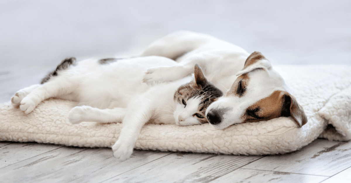 Calm dog and cat