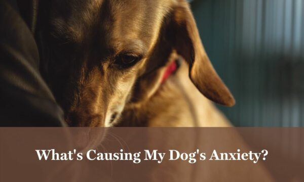 Dog anxiety causes