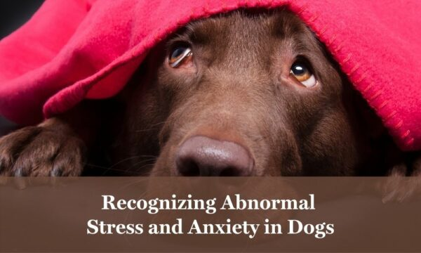 Abnormal stress and anxiety in dogs.