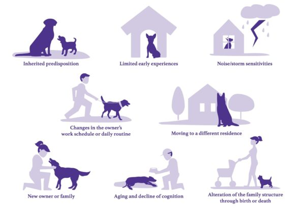 8 Reasons Dog Has Separation Anxiety