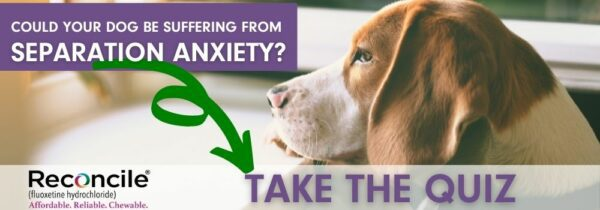 Take the separation anxiety quiz!
