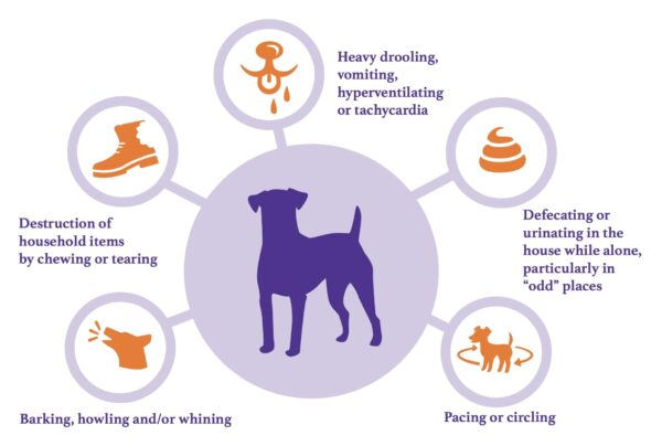 5 common signs of separation anxiety in dogs.