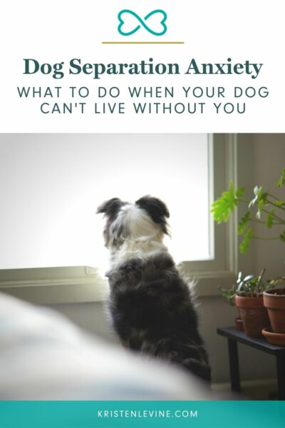 Help for a dog with separation anxiety