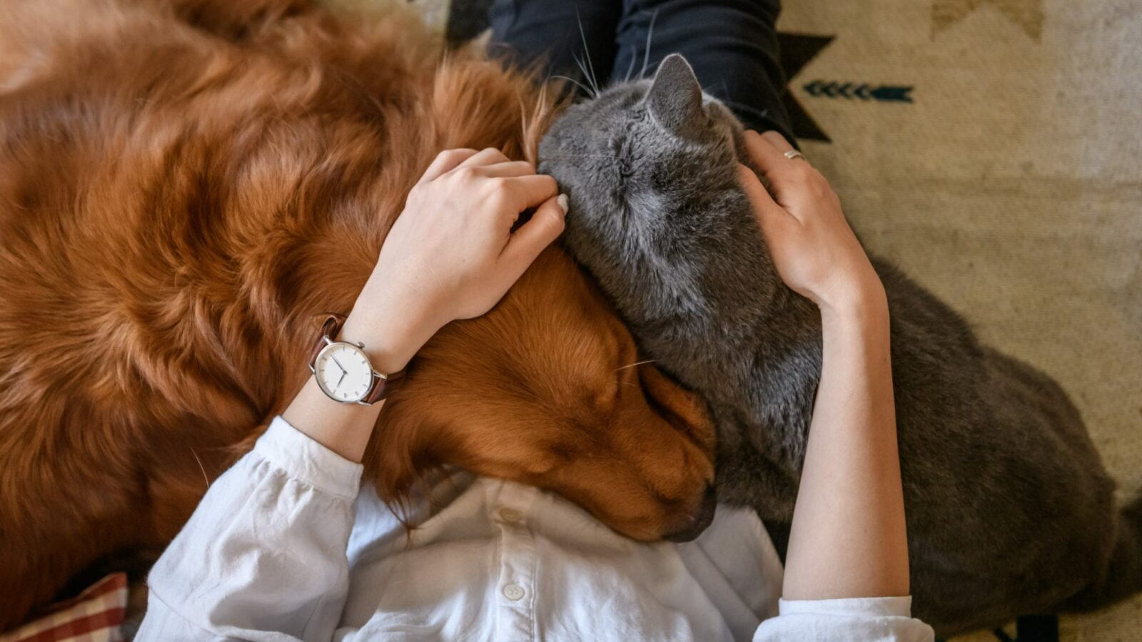 pet lovers with cat and dog