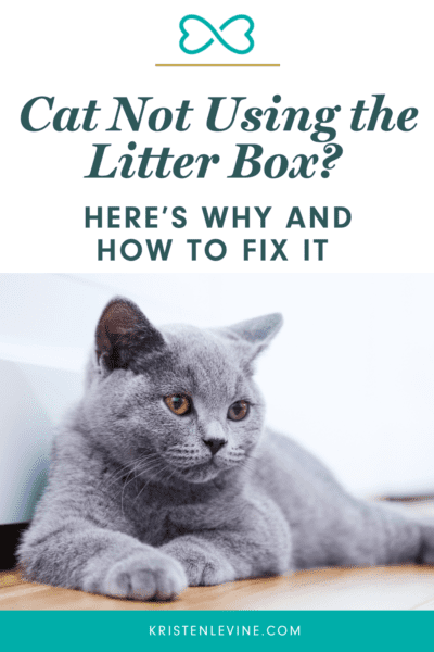 Cat not using litter? Here's why and how to fix it.